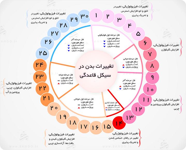 بیشترین احتمال باروری در چرخه قاعدگی | متخصص زنان بجنورد